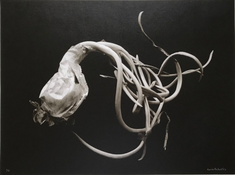 Oignon Blanc (White Onion), 1992, printed 2003