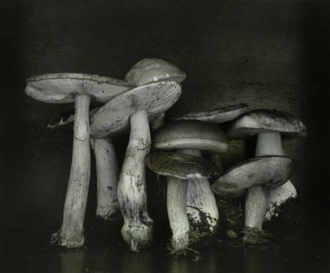 Untitled (mushrooms), Wiepersdorf, 2010, Gelatin silver print with applied oil paint