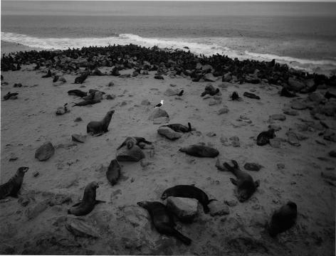 Skeleton Coast, Namibia,2005, Gelatin silver print