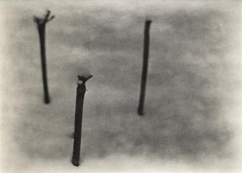 Untitled (three stems), 2009