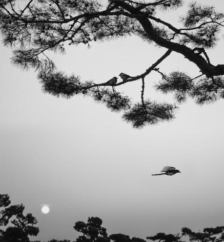 Seoul, South Korea (three birds), 2016, Gelatin silver print