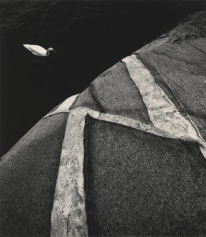 Kökar, Finland (swan), 2008, Gelatin silver print