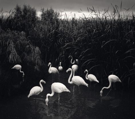 Mt. Etjo, Namibia (flamingos), 2005