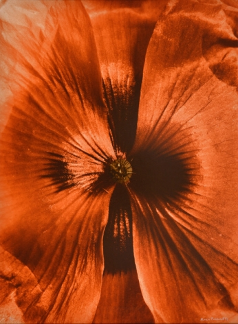 Coeur de Coquelicot (Heart of poppy), 1994, printed 1995