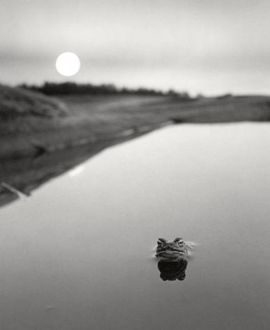 Pentti Sammallahti Ristisaari, FInland (frog in water), 1974