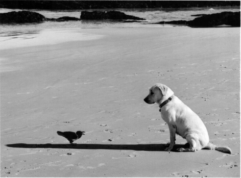 Western Cape, South Africa (bird and dog),2002