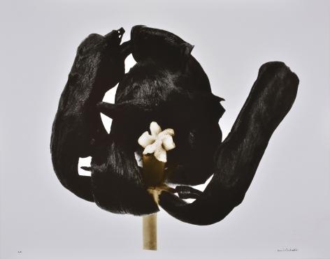Tulipe Noire (Black Tulip), 1977, printed 2001