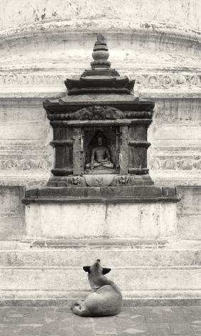 Kathmandu, Nepal (Dog and shrine),1994, Gelatin silver print