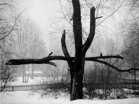 Helsinki, FInland (Birds on Broken Branch),2002