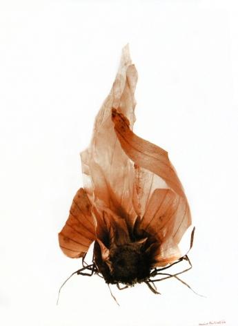 La peau et les racines de l'oignon (Onion skin and roots), 2002, Edition 3/10