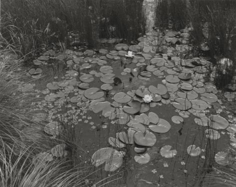 Aquatic Plants #1, Saddle River, New Jersey, 1967, printed 2007