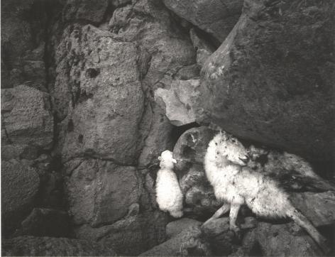 St. Govan's Head, Wales,1995, Gelatin silver print