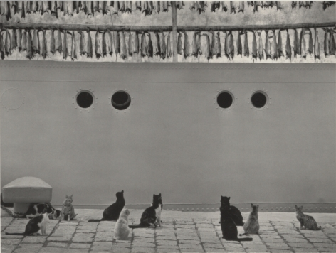 cats and dried fish, iceland