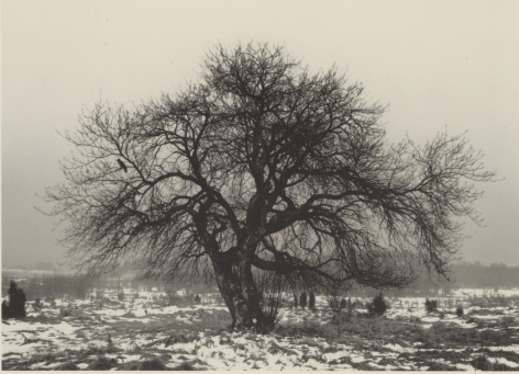 tree, finland