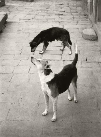 Swayambhunath, Nepal (two dogs), 1994, Gelatin silver print