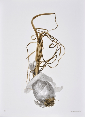 Oignon Blanc (white onion), 2002, printed 2005