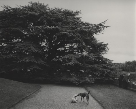 Co. Limerick, Ireland (two dogs), 1978