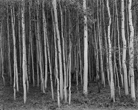 Aspen Grove, Aspen, Colorado, 1969, printed 2016