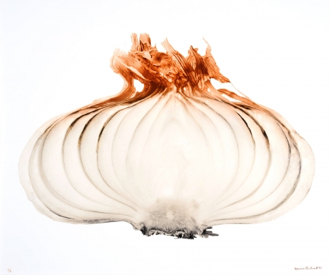 Oignon large (Large onion), 1971, printed 2007