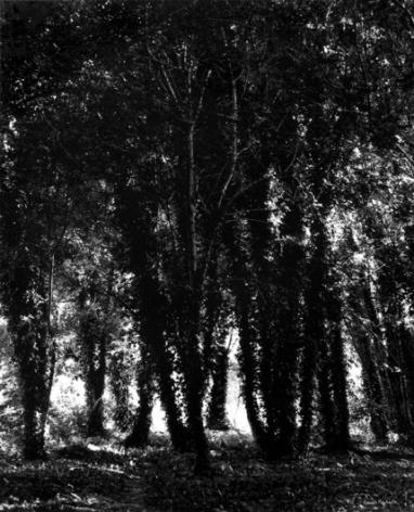Dans le Marais Poitevin (In the Marais Poitevin), 1986