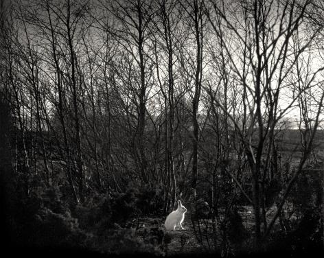 Signilskar, Finland (White Rabbit),1974