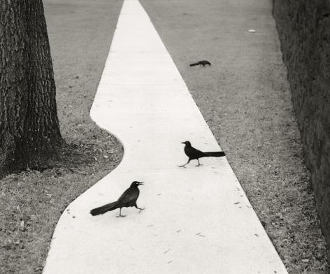 Houston, Texas (two birds), 1998, Gelatin silver print