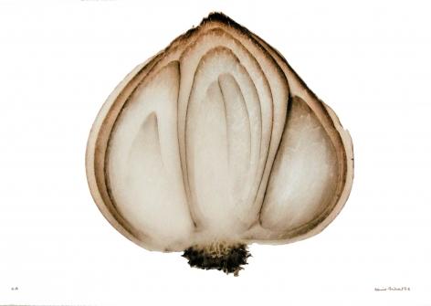 Oignon (Onion), 2002, Edition 3/10