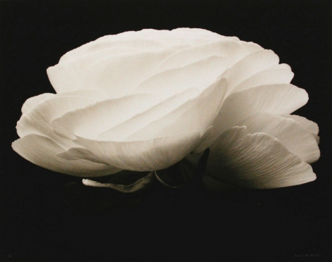 Gardenia, 1994, Edition of 2 A.P., printed 2001