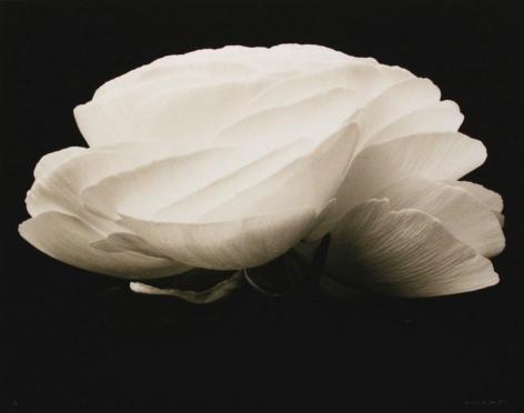Gardenia, 1994, printed 2001