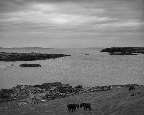 Pentti Sammallahti (b. 1950, Helsinki), Stenness, Shetland, Scotland, 2016