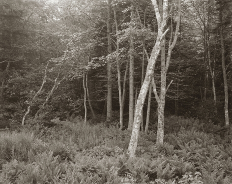 Woods, Port Clyde, Maine, 1970