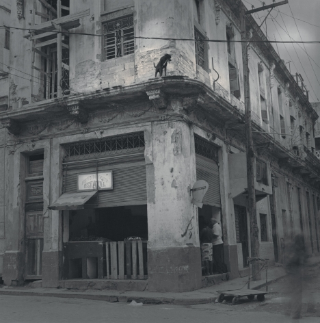 Dog on Balcony, Havana, 2006