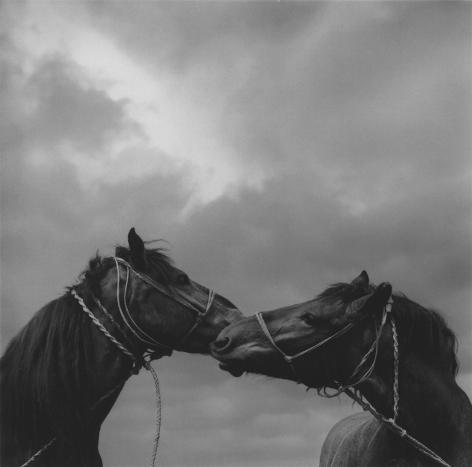pecs, hungary (two horses)