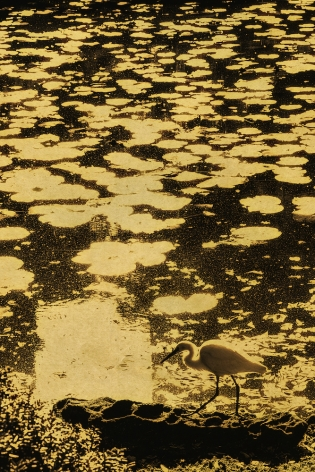 lilypads, bird, gold