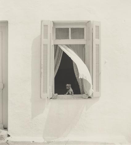 dog in window, greece