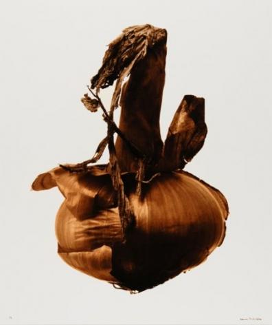 Grande oignon (Large onion), 1983