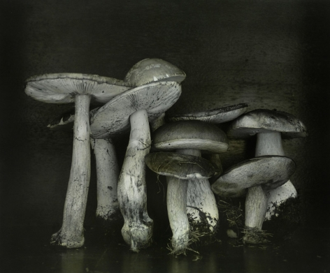 Untitled (Mushrooms), Wiepersdorf, 2010, Gelatin silver print with applied oil paint