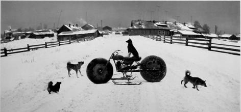 Pentti Sammallahti Solovki, White Sea, Russia (dog on vehicle), 1992
