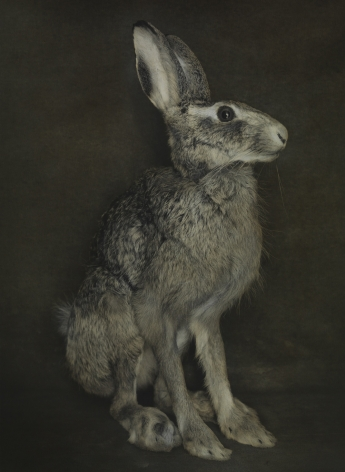 Untitled (Hare), Jena, 2014, Gelatin silver print with applied oil paint