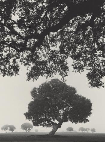 trees, spain