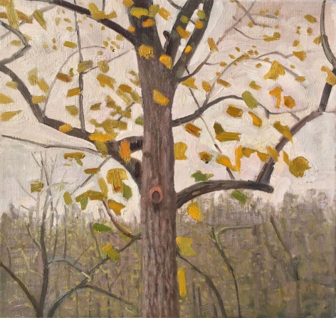 Chatwood Grey Day, Tree with Yellow Leaves, 2015