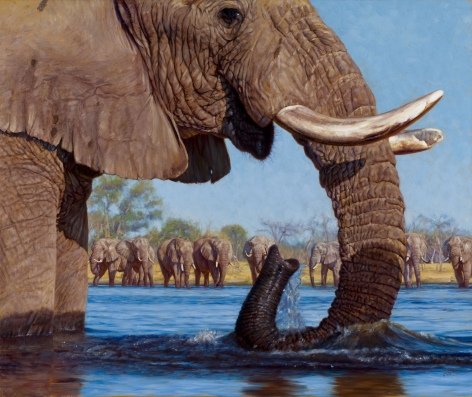 Swimming With Elephants, 2008