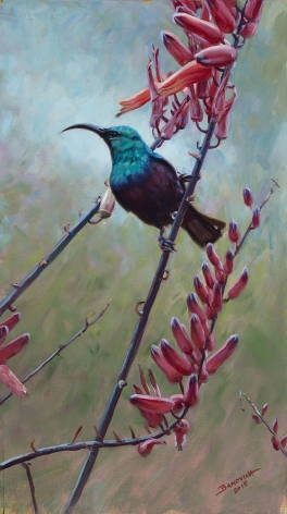 Aloe II - Marico Sunbird, 2015