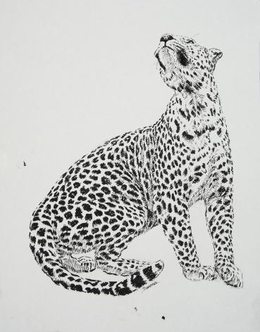 Leopard, 2019