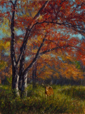 Whitetail Autumn, 2015