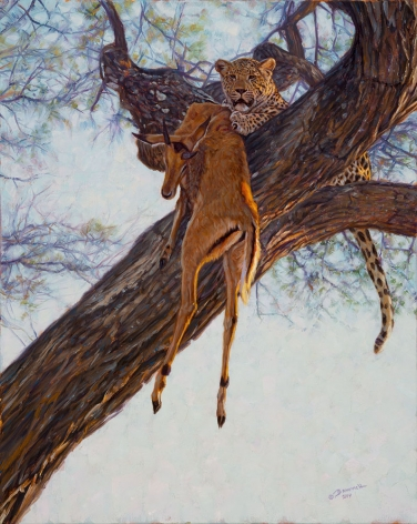 Leopard Kill in the Acacia, 2014
