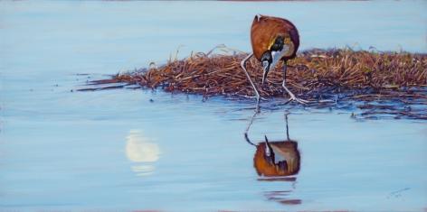 The Jesus Bird-African Jacana, 2014