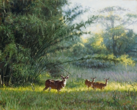 Mt. Nyala and Bamboo, 2007