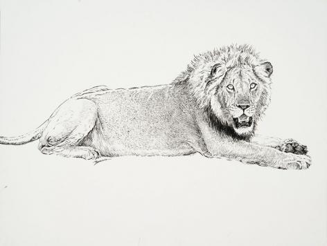 Lion, 2019