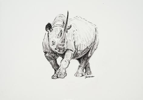Rhino, 2019